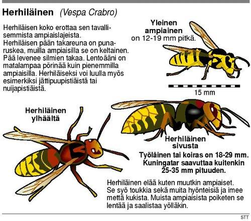 Herhiläisen Pesä