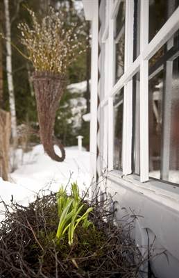 Oksista syntyy kaunis pesä kevään sipulikukille. Pajusta tehtyyn kartioon voi asetella kukkia sesongin mukaan.