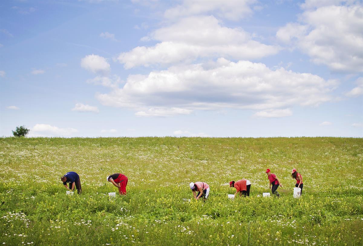 Ulkomaisia kausityöntekijöitä saapuu yli 6500 – melkein kaikki tulossa Ukrainasta