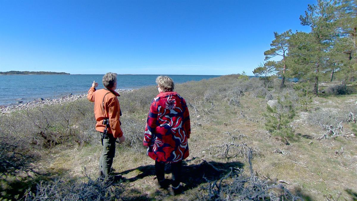 Luonto Plus Reilassa: Aava merimaisema ja tyrnikääpä