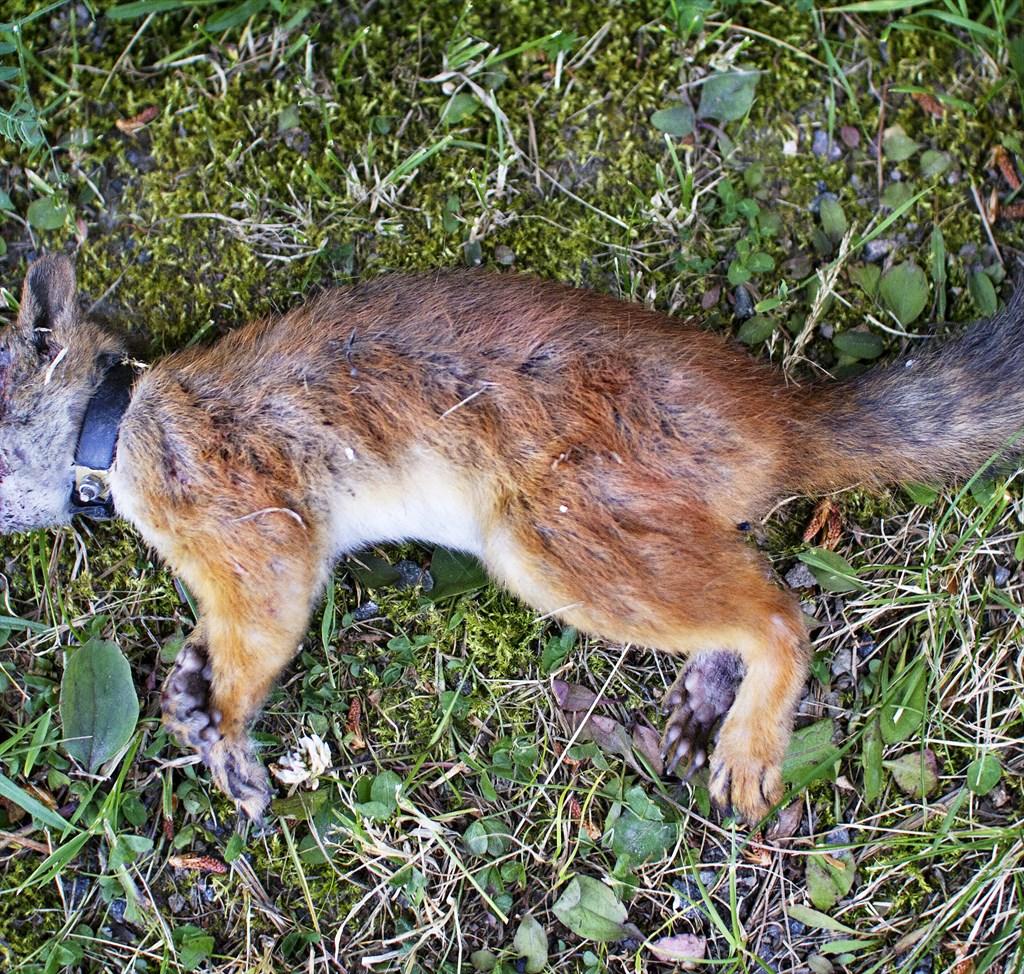 Kuivan Kesän Orava