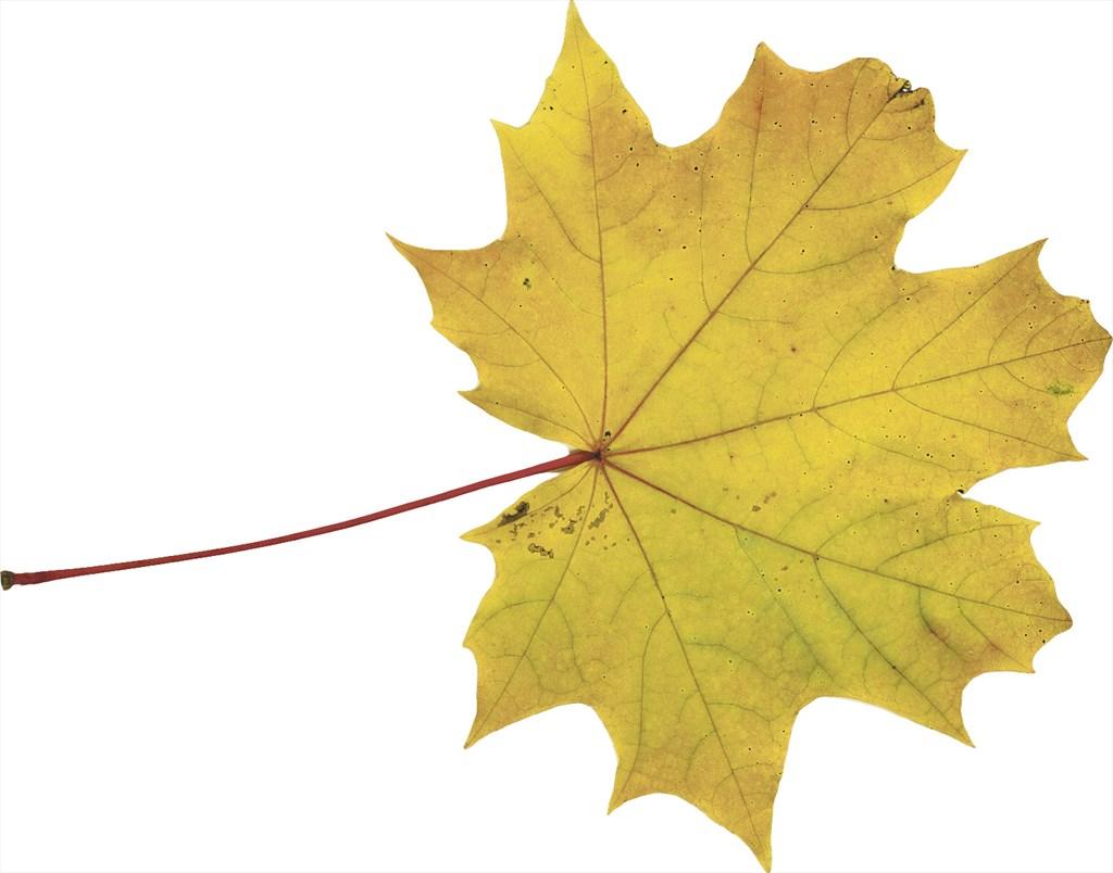 Puiden Lehdet