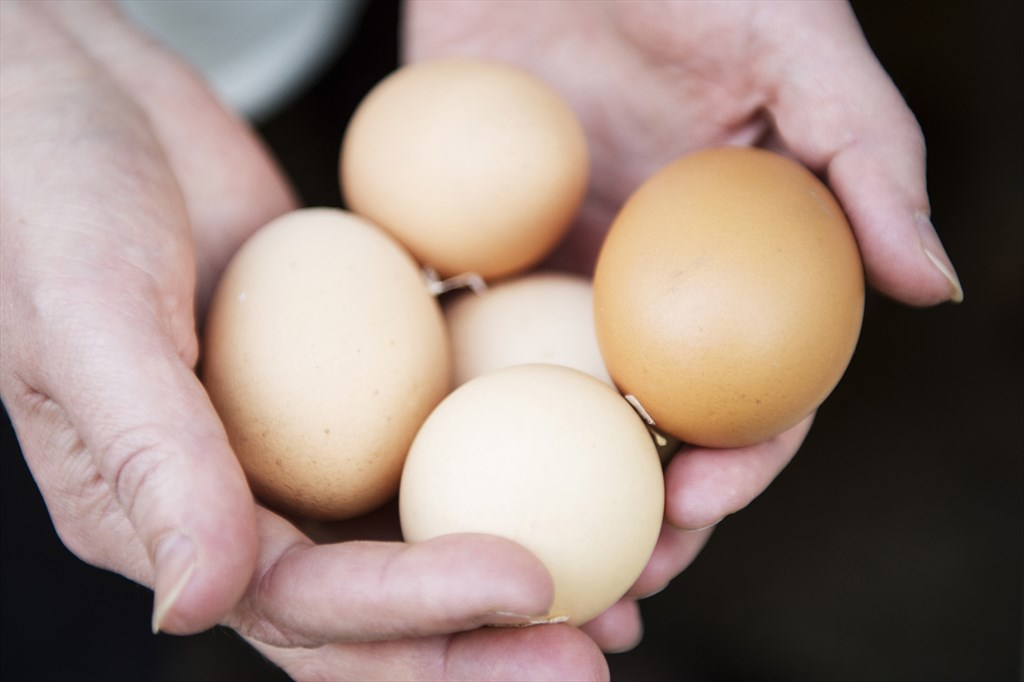 isompi muna suomalaisia pilluja